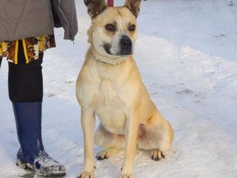 Просмотреть изображение  Ищет дом удивительно умная собака-улыбака, 56334609 в Москве