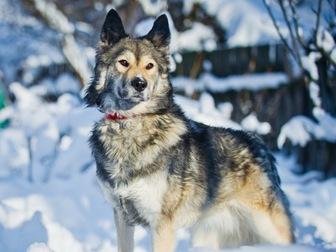 Скачать бесплатно изображение  Красивая собака Луна в добрые руки, 57234097 в Москве