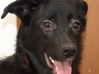 Скачать foto  Чудесный щенок Муха ищет дом, 58071485 в Москве