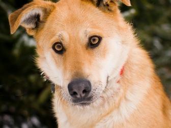 Скачать бесплатно фотографию  Чудесная собака Сенди в добрые руки 58256394 в Москве