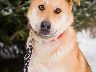 Просмотреть фотографию  Чудесная собака Сенди в добрые руки 58256394 в Москве