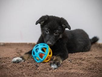 Уникальное фотографию  Очаровательные щенки Боня и Таксена ищут дом, 58365206 в Москве