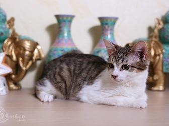 Новое изображение  Очаровательная кошечка Люсси ищет дом! 58627200 в Москве