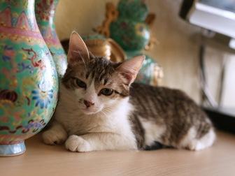 Новое фотографию  Очаровательная кошечка Люсси ищет дом! 58627200 в Москве
