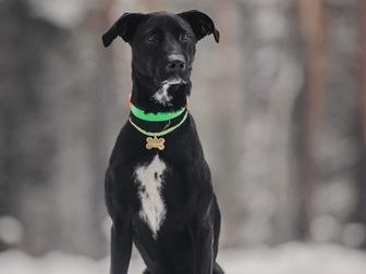 Скачать бесплатно фото  Ищет дом самая чудесная собака Ирада! 67656535 в Москве