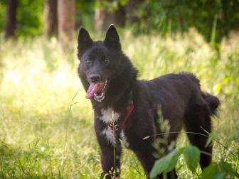Увидеть foto  Маленькая собака Нора в добрые руки, 67657717 в Москве