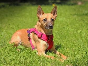 Просмотреть изображение  Чудесная собака Чили в добрые руки, 67664938 в Москве