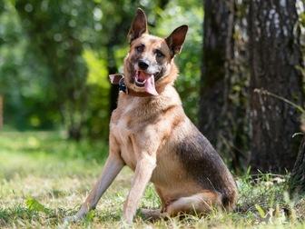 Скачать бесплатно изображение  Молодой пес Туман ищет дом! 67666270 в Москве