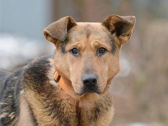 Скачать фото  Чудесный пес Бутч ищет дом, 68121956 в Москве