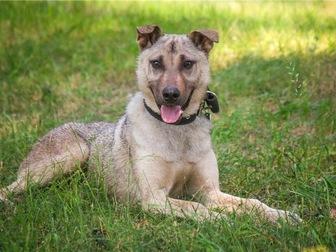 Скачать бесплатно foto  Чудесный щенок Купер в добрые руки, 68125319 в Москве