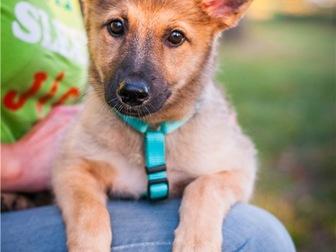 Скачать бесплатно изображение  Чудесный щенок Кнопочка в добрые руки, 68128810 в Москве