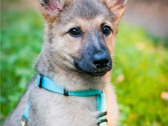 Свежее foto  Чудесный щенок Кнопочка в добрые руки, 68128810 в Москве