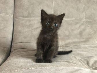 Свежее изображение  Ищет дом очаровательный котенок (девочка), 68132115 в Москве