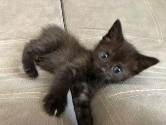 Просмотреть фотографию  Ищет дом очаровательный котенок (девочка), 68132115 в Москве