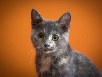 Просмотреть foto  Милый котенок Арья в добрые руки, 68132649 в Москве