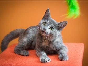 Новое фотографию  Милый котенок Арья в добрые руки, 68132649 в Москве