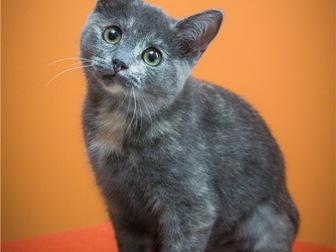 Свежее изображение  Милый котенок Арья в добрые руки, 68132649 в Москве
