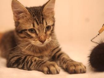 Увидеть фотографию  Очаровательный котенок (мальчик) в добрые руки, 68178961 в Москве