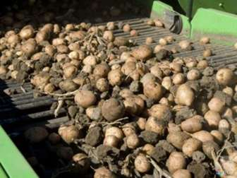 Увидеть изображение  Продам сельхозпредприятие, производственная база, кфх, выращивание картофеля 73165995 в Кемерово