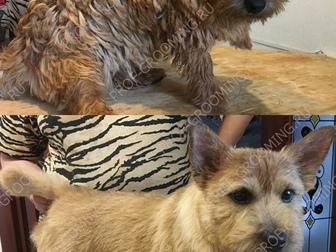Новое фотографию Услуги для животных Стрижка собак, тримминг, стриппинг, 8728620 в Москве