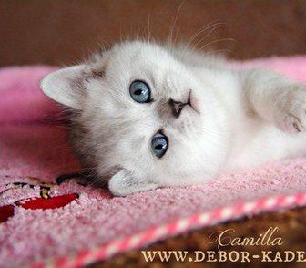 Фотография в Кошки и котята Продажа кошек и котят Девочка кокетка! С невероятной текстурой в Москве 25000