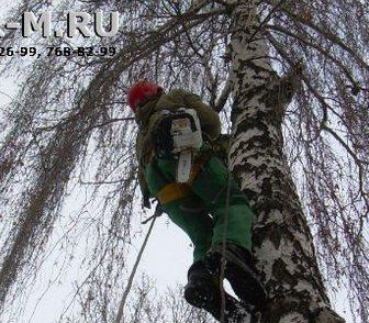 Фотография в Прочее,  разное Разное Оперативное удаление опасных деревьев частями в Москве 2000