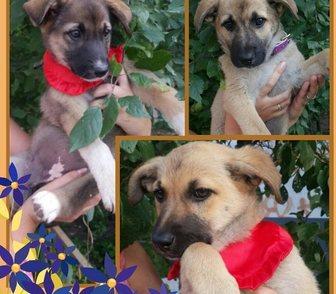 Фотография в Собаки и щенки Продажа собак, щенков Срочно ищем хозяев для этих малышей! Все в Москве 0