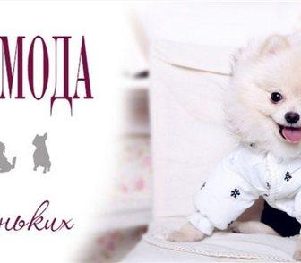Фотография в Недвижимость Продажа домов Интернет-магазин для маленьких собак Vogue4dog в Москве 0