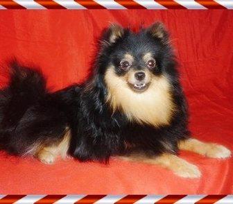 Изображение в Собаки и щенки Продажа собак, щенков Предлагаем в качестве домашних любимцев замечательных в Москве 15000