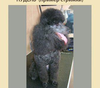 Фото в Домашние животные Услуги для животных Грумер-стилист. Профессионально сделаю гигиенический, в Москве 0