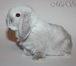 Foto в Домашние животные Грызуны Предлагаем для резервирования и продажи карликовых в Москве 4555