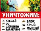 Скачать бесплатно фотографию  Служба дезинфекции,уничтожение клопов,клещей,ос в Можайске,в Рузе 32652500 в Можайске