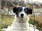 Фото в   Отдам щенка, кобель, 7-8 месяцев. Здоров, в Мурманске 0