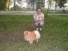 Изображение в Собаки и щенки Вязка собак Нам 1, 5 годика, красивый, привитой, дружелюбный в Муроме 0