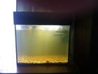 Просмотреть фотографию Аквариумы продам аквариум на 20 литров 66600371 в Муроме