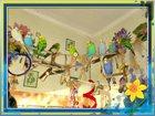 Фото в   Открыта бронь на птенцов волнистых попугаев в Мытищи 2000