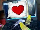 Новое изображение  Волнистые Попугаи Чехи (птенцы) 39777411 в Москве