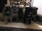 Изображение в Собаки и щенки Продажа собак, щенков Дарю , милых , красивых , крепких , щенков в Набережных Челнах 0