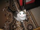 Скачать бесплатно изображение Отдам даром - приму в дар Отдам кошечку 1, 5 года с милыми вислоухими ушками в хорошие руки, 42515283 в Набережных Челнах