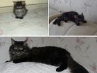 Фото в   Отдам любителям домашних животных кошку дворовой в Находке 0