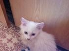 Скачать бесплатно foto  отдам в добрые руки котят 37884731 в Нальчике