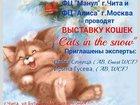 Фотография в Кошки и котята Выставки кошек Дорогие заводчики! Планируйте свои выставки в Нерюнгри 0
