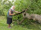 Уникальное фотографию Отдам даром - приму в дар Отдам дрова - спиленные деревья 33347199 в Невинномысске