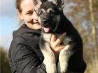 Фотография в   Питомник Легенда Русь предлагает щенков рожд. в Нижнем Новгороде 30000