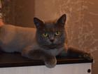 Фотография в Домашние животные Услуги для животных Стрижка собак и кошек под машинку, гигиеническая в Нижнем Новгороде 500