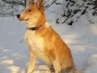 Скачать бесплатно foto Продажа собак, щенков Щеночек без лапки ищет дом 37765271 в Нижнем Новгороде