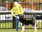 Уникальное фото Вязка собак Предлагается для вязки красивый, породный кобель сибирский хаски, 43566496 в Нижнем Новгороде