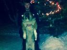 Скачать foto  Ищем кобеля Московской сторожевой для первой вязки 50693948 в Нижнем Новгороде