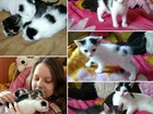 Просмотреть фото Отдам даром - приму в дар Отдам котят в добрые руки! 64792743 в Нижнем Новгороде
