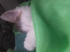 Скачать изображение Отдам даром - приму в дар Отдам котенка в добрые и надежные руки, 67761625 в Нижнем Новгороде
